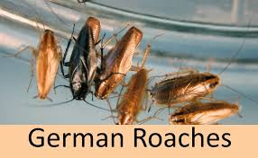 Cockroaches In Dishwasher Diy Guide To Get Rid Of Roaches Without Poisoning Yourself