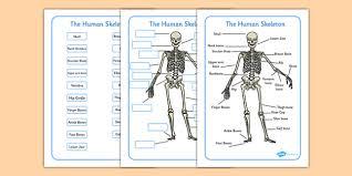 human skeleton labelling sheets common names human skeleton
