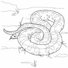 line drawings anaconda coloring page fresh in painting online