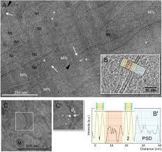 resolucion organica 5544 de 2003 notinet imaging drosophila brain by combining cryo soft x ray microscopy of