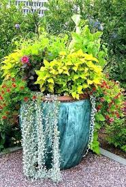 Outdoor Container Gardening Ideas Container Gardening Ideas Container Garden Ideas Lovely Container