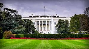 dan bongino trump is not safe in the white house anymore here u0027s