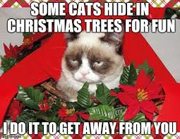 Grumpy Cat Memes Christmas - grumpy cat mistletoe meme imgflip