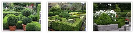Real Topiary Trees For Sale - boxwood garden stately boxwood hedges edges and topiary