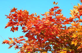 perennials colorful fall foliage u2013 garden diana
