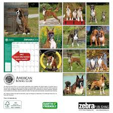 boxers american kennel club 2016 wall calendar zebra publishing