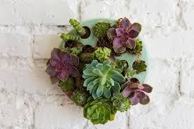 diy succulent wall planter u0026 video the house that lars built