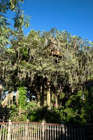 file tree house jpg swiss family treehouse wikipedia