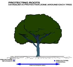 get to the root of it watering trees in winter signature