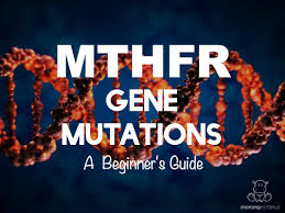 mthfr gene mutations a beginner u0027s guide