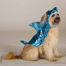 Shark Costume Halloween 47 Halloween Costumes Dog Thefashionspot