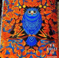 secret garden colouring book postcards 94 best owl secret garden coruja jardim secreto images on