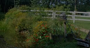 massachusetts native plants pollinator friendly gardens new england habitat gardening blog