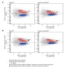 rng105 caprin1 an rna granule protein for dendritic mrna