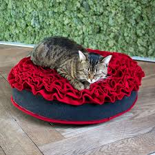 lay down on a cat bed of roses