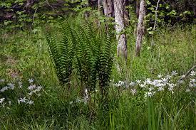 native plants of nc favorite plants piedmont gardener