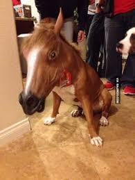 Horse Mask Meme - mask hysteria 10 amazing cats dogs wearing horse masks horse