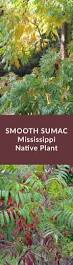 propagating native plants 34 best mississippi native plants images on pinterest native