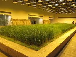 Indoor Balcony by Worlds Most Astonishing Indoor Farm Tokyo Business District