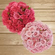bulk flowers online spray roses 40cm pack 120 stems sprays