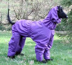 afghan hound pictures rain wear for afghan hounds saluki u0027s and similar sized dogs