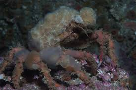 cool examples of symbiotic relationships in the ocean