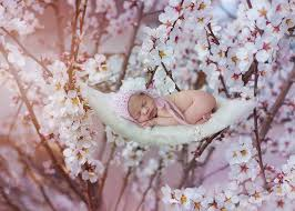 digital backdrops white blossom newborn digital backdrop natalie houlding