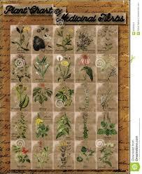 plant chart of medicinal herbs 1 stock illustration image 63360212
