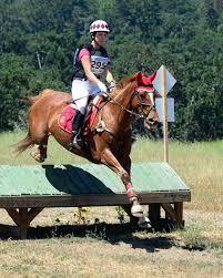 ferrari horse tahoe treasure u2013 horses healing hearts inc