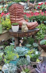 773 best succulent ideas from the barn nursery chattanooga