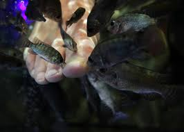 nevada legislature in uncharted waters when it comes to fish