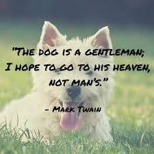 I Love Soccer Quotes by Top 100 Greatest Dog Quotes And Sayings With Images