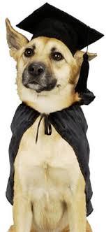 dog graduation cap dog graduation cap and gown graduate dog costume the graduate