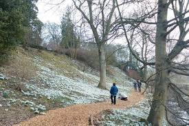 five snowdrop gardens to visit u2013 richard jackson u0027s garden