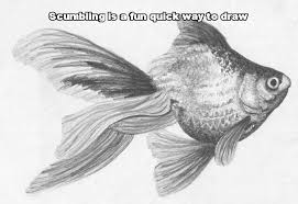 lets draw how to draw step by step pencil drawing course