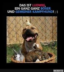 lustige hundesprüche 181 best hund und katze images on