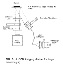 liquid light guide patent us8021848 rapid and sensitive detection of cells and