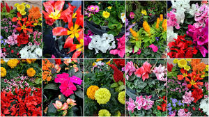 mille fiori favoriti a bit of spring in winter at o u0027toole u0027s