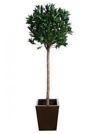 single bay topiary tree 120cmh