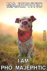 Tuna Sub Meme - majephtic phteven tuna the dog know your meme