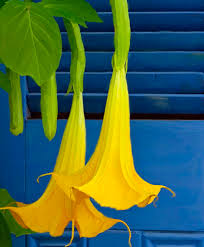 Yellow Color Combinations 122 Best Color Blue Green Yellow Images On Pinterest Blue Green