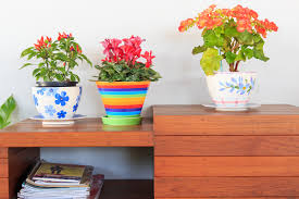 10 houseplants you can keep in your home to improve air quality