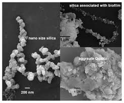 microbe clay mineral interactions american mineralogist