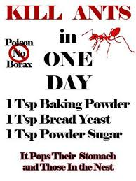 How To Get Rid Of Mosquitoes In My Backyard Best 25 Ant Killer Recipe Ideas On Pinterest Ant Killer Spray