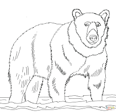 coloring pages coloring pages bear coloring pages teddy bears