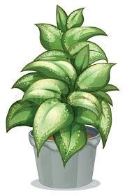 a leafy plant stock vector colourbox