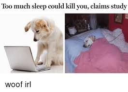 Dog In Bed Meme - too much sleep could kill you claims study woof irl sleeping