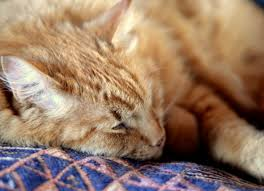 pet euthanasia be not pricey euthanasia cremation and what it costs petmd