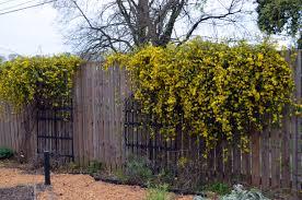 good news continued u2026 behind cohutt u0027s fence