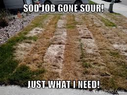 Landscaping Memes - check out this y m landscaping meme complaint memes pinterest